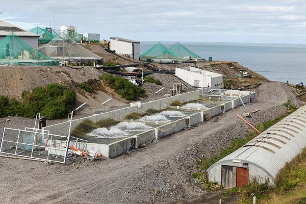 Fiskeldið Haukamýri